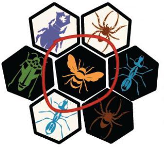 Hive : But du jeu