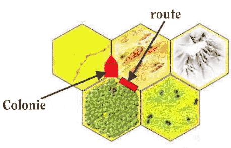Route et colonie